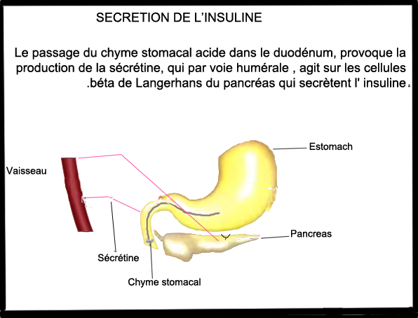 INSULINE SECRETION